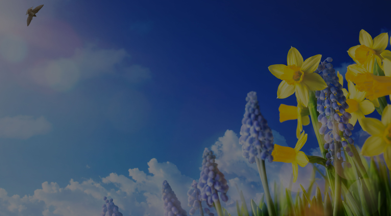 spring-sim-scs